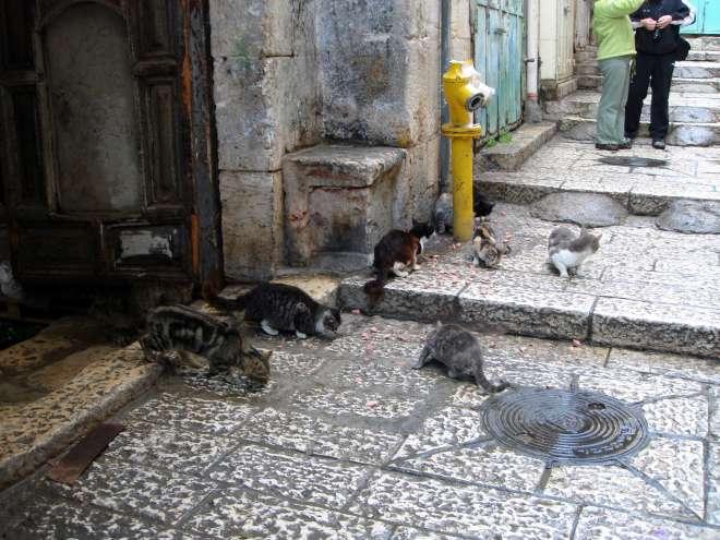 Кошки в Израиле (56.51КиБ)